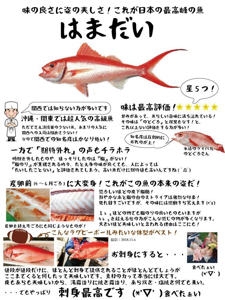 【魚図鑑】はまだい