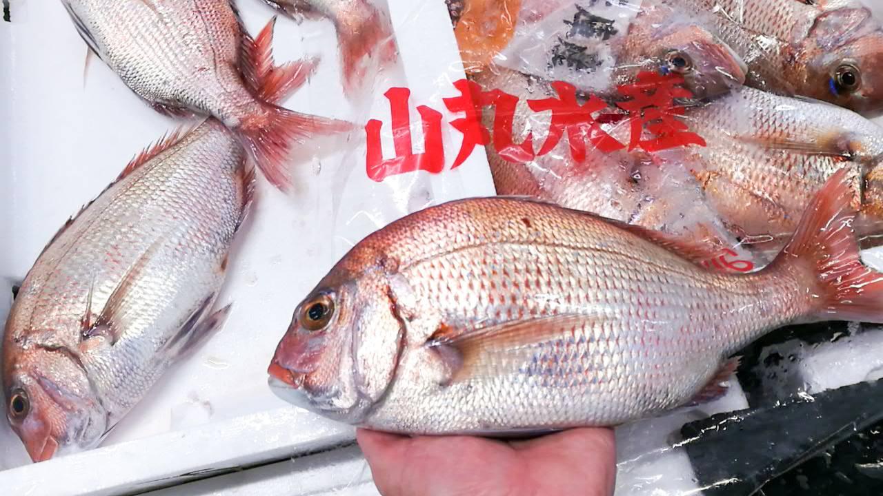 明石山丸天然鯛