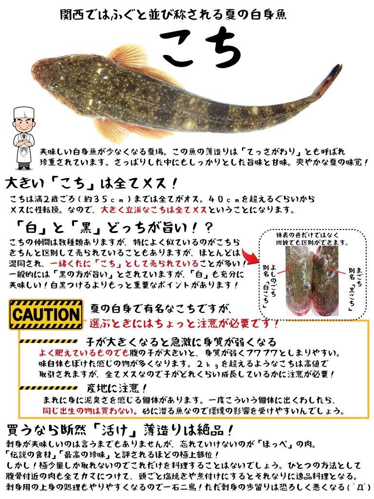 魚図鑑 こち
