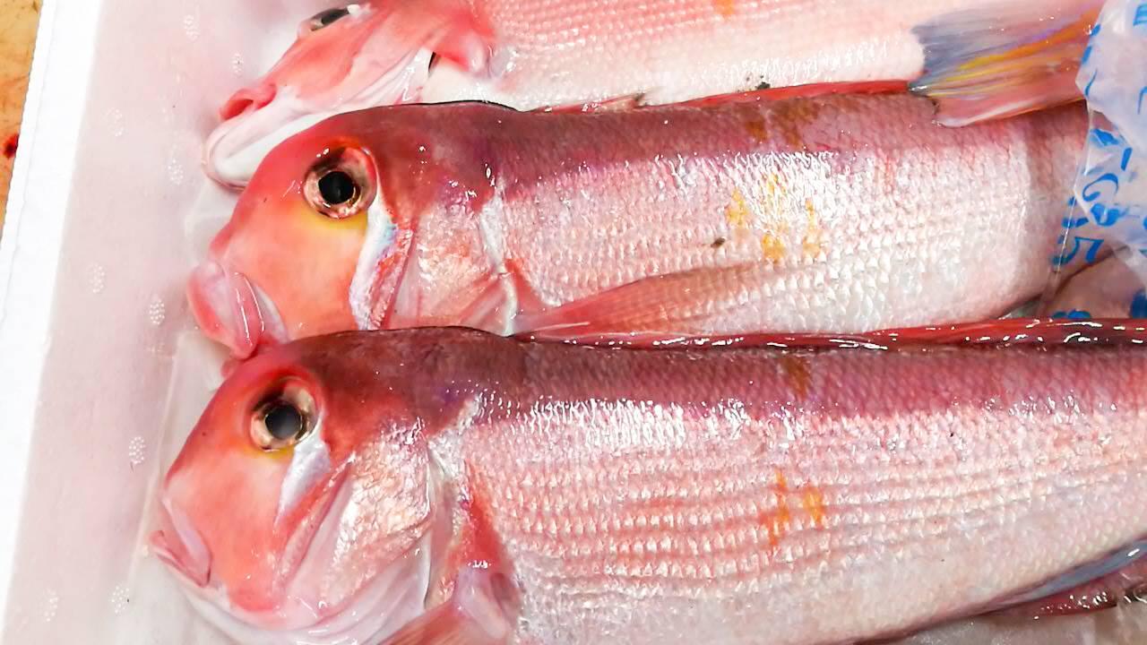 島根釣り甘鯛