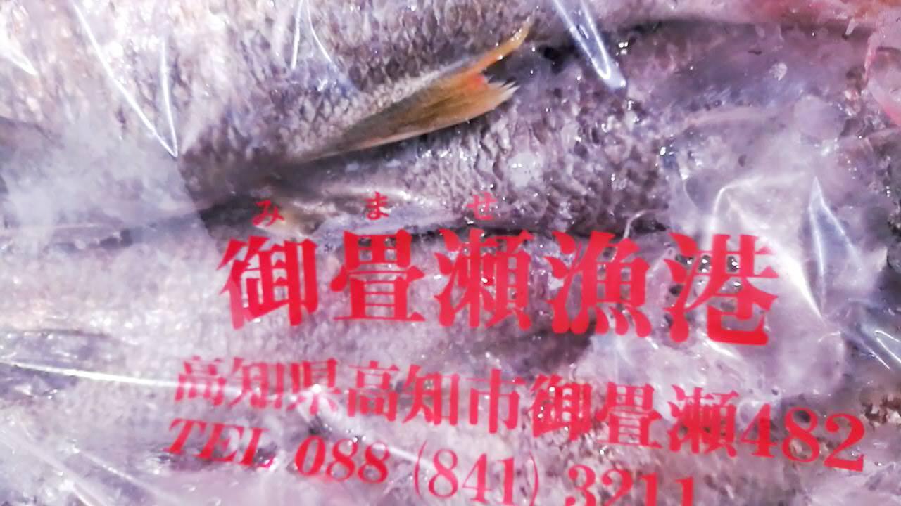 御畳瀬漁港の魚