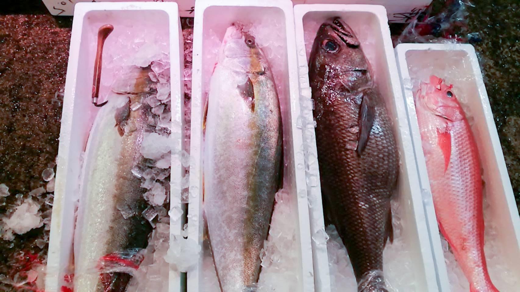 巨大魚祭り