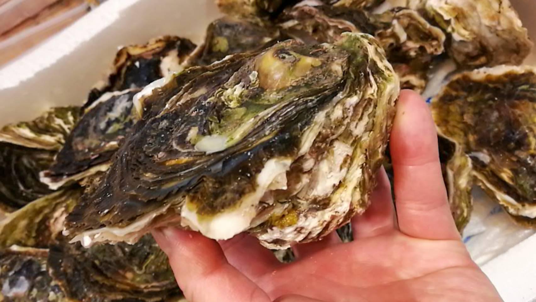 天草岩牡蠣