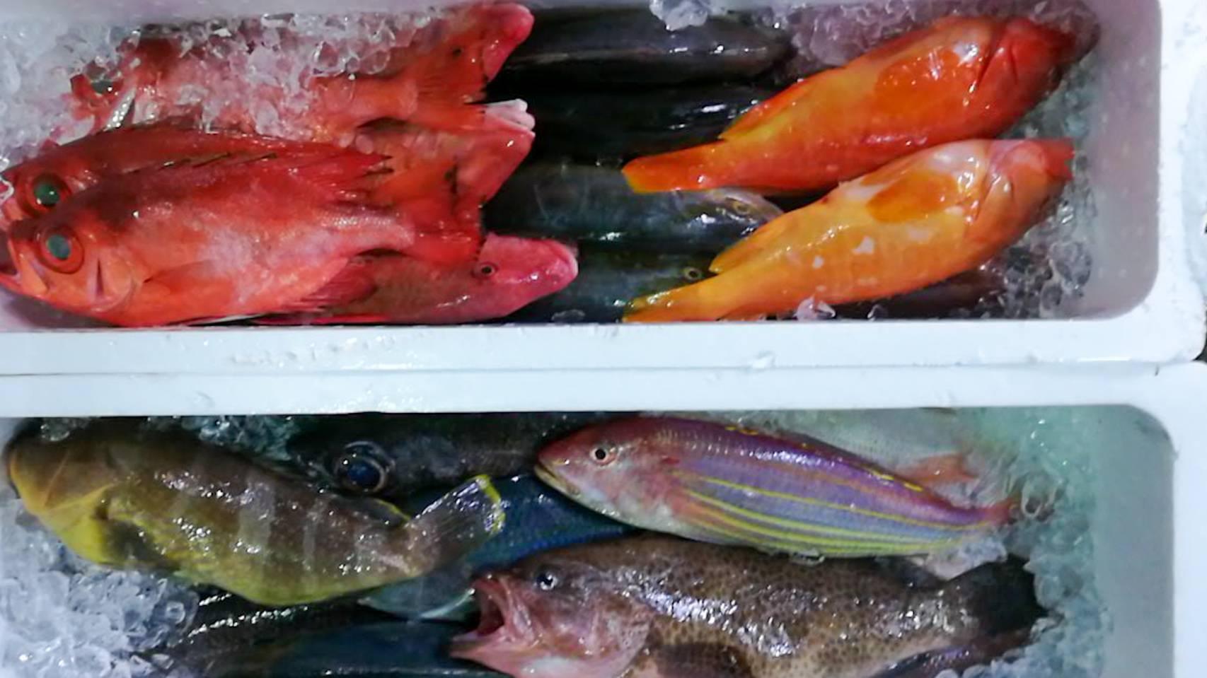 色んな天然魚