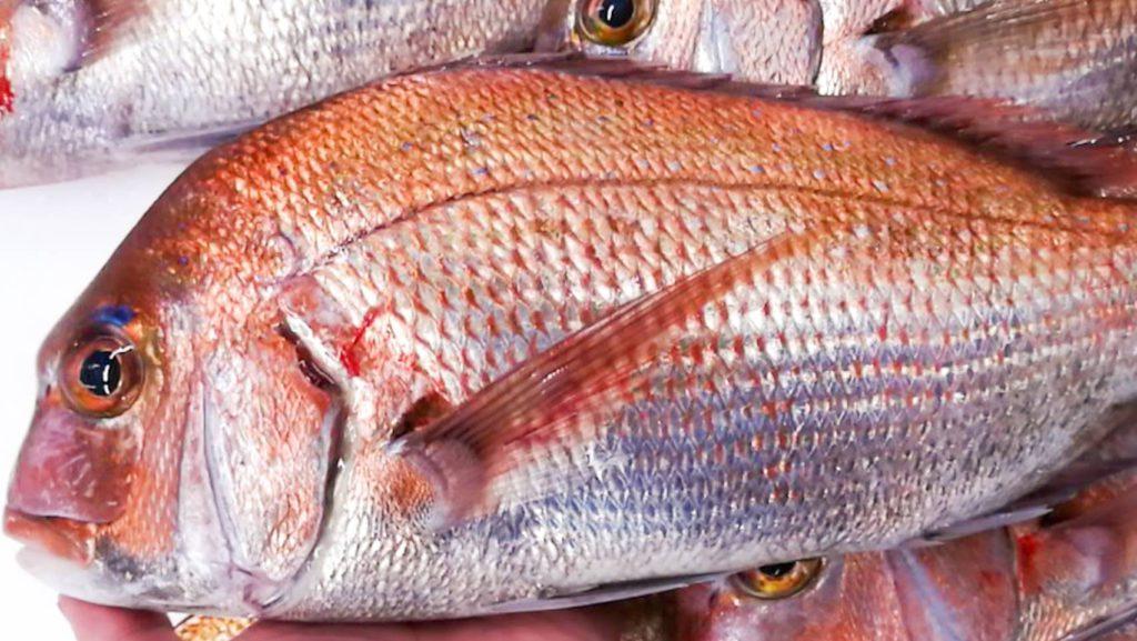 淡路天然鯛