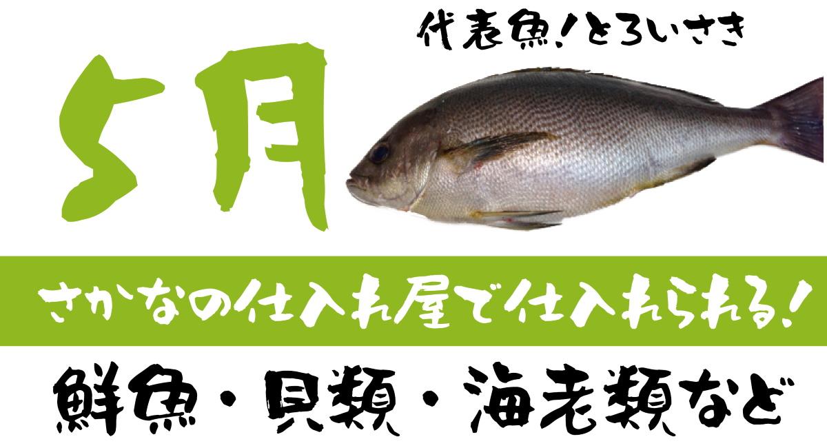 【さかなの仕入れ屋で入荷】5月が旬の美味しい魚!