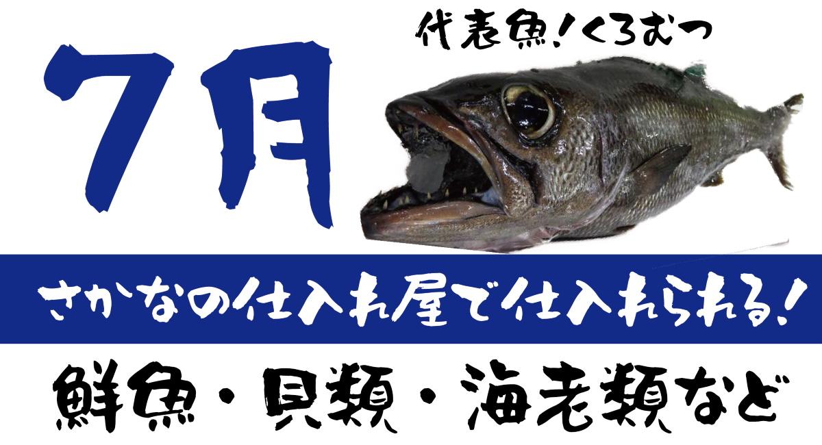 【さかなの仕入れ屋で入荷】7月が旬の美味しい魚!
